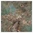 Plytelės Marmi Maximum Amazonite 75x150